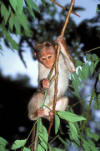 monkey pictures - monkey in tree